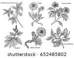 set of medicinal plants... | Shutterstock .eps vector #652485802