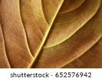 Detail Of A Dry Leaf