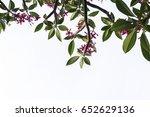 branches of leela wadi.... | Shutterstock . vector #652629136