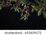 branches of leela wadi.... | Shutterstock . vector #652629172