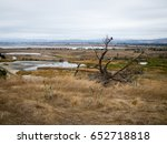 Wetlands And Marsh With Dead...