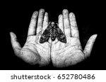 death head butterfly on hands   ...   Shutterstock . vector #652780486