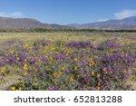 desert five spot  eremalche... | Shutterstock . vector #652813288