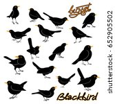 Blackbird Vector Illustration...
