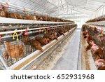 hen  chicken eggs and chickens...   Shutterstock . vector #652931968
