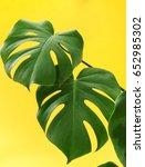 monstera leaf | Shutterstock . vector #652985302