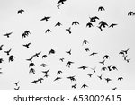 black and white silhouette of... | Shutterstock . vector #653002615