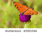 Butterfly is on the flower