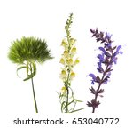 Harming Wildflowers On A Whit...