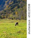 horse in green grass | Shutterstock . vector #653115538