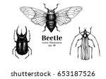 vector retro hand drawn beetle... | Shutterstock .eps vector #653187526