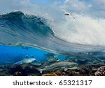 surfing ocean wave swirl white seagull flying above and four reef sharks underwater over corals - stock photo