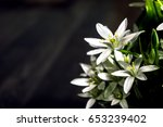 white flowers abstract...   Shutterstock . vector #653239402