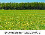 lush springtime field with... | Shutterstock . vector #653239972
