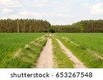 grain growing on a field in... | Shutterstock . vector #653267548