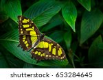 Beautiful Butterfly Metamorpha...