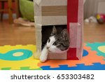 Stock photo cat playing in the cardboard box 653303482
