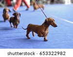 four dachshunds on the dog show | Shutterstock . vector #653322982