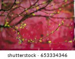 A Branch Of A Tree With Small ...