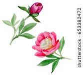 wildflower peony flower in a...   Shutterstock . vector #653382472
