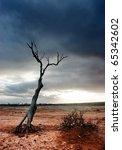 Dead Tree In The Desolate Desert