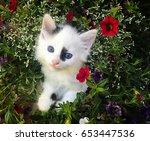 Stock photo kitten in flowers 653447536