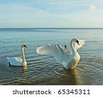 Birds Above Sea  Big Swan...
