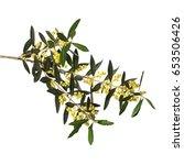 olive flowers blossom on white... | Shutterstock . vector #653506426