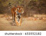 tiger in the nature habitat.... | Shutterstock . vector #653552182