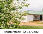 Horse Stables In Summer With...