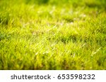 abstract natural background... | Shutterstock . vector #653598232