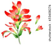 wildflower indian paintbrush... | Shutterstock . vector #653608276