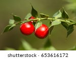 detail of leaves and fruits of... | Shutterstock . vector #653616172