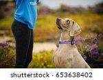 Weimaraner Dog In Field Lookin...