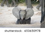 Stock photo young baby african elephant with ears out and trunk up savuti area of chobe national park in 653650978
