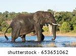 african bull elephant in the...   Shutterstock . vector #653651062
