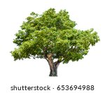 isolated big tree on white... | Shutterstock . vector #653694988