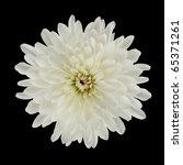 Single White Dahlia Flower Isolated on Black Background - stock photo