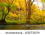 autumn colors of oirase river ... | Shutterstock . vector #65372074