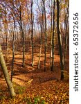 in the autumn forest...   Shutterstock . vector #65372656