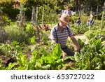 Small photo of Mature Man Working On Community Allotment