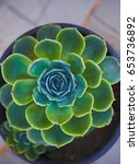 sempervivum or houseleeks... | Shutterstock . vector #653736892