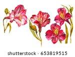 alstroemeria flower set. hand... | Shutterstock . vector #653819515