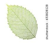 leaves rose  isolated on white. ...   Shutterstock .eps vector #653828128