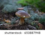 cep growing in the forest | Shutterstock . vector #653887948