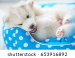 Stock photo close up of cute siberian puppy play and lying on the petbed in home 653916892
