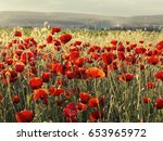 flowers red poppies blossom on... | Shutterstock . vector #653965972