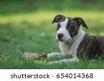 Stock photo stafford shire 654014368