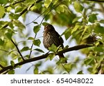 sparrow  passeridae  perched on ... | Shutterstock . vector #654048022