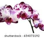 orchid isolated white background | Shutterstock . vector #654073192